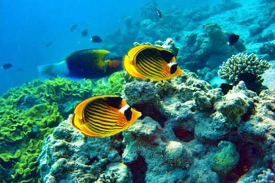 Unterwasser Thailand, Hotel und Dschungelcamp in Thailand und jeep Safari mit 4WT Four Wheel Travel in Suedostasien, Indochina, Thailand und Bangkok.